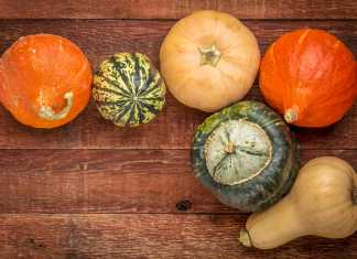 Winter Squash Overview - Cook for Your Life