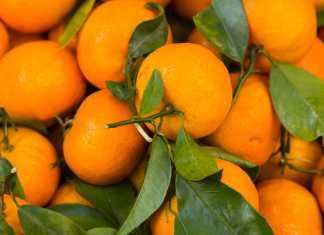 oranges, cook for your life